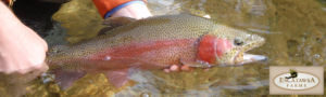 Escatawba Fly Fishing Virginia Alleghany Highlands
